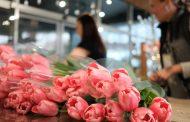 Каждая четвертая россиянка хочет получить в подарок на 8 Марта тюльпаны, а каждая пятая – розы