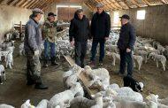 В Дагестане проводят селекционно-племенную работу с дагестанской горной породой овец
