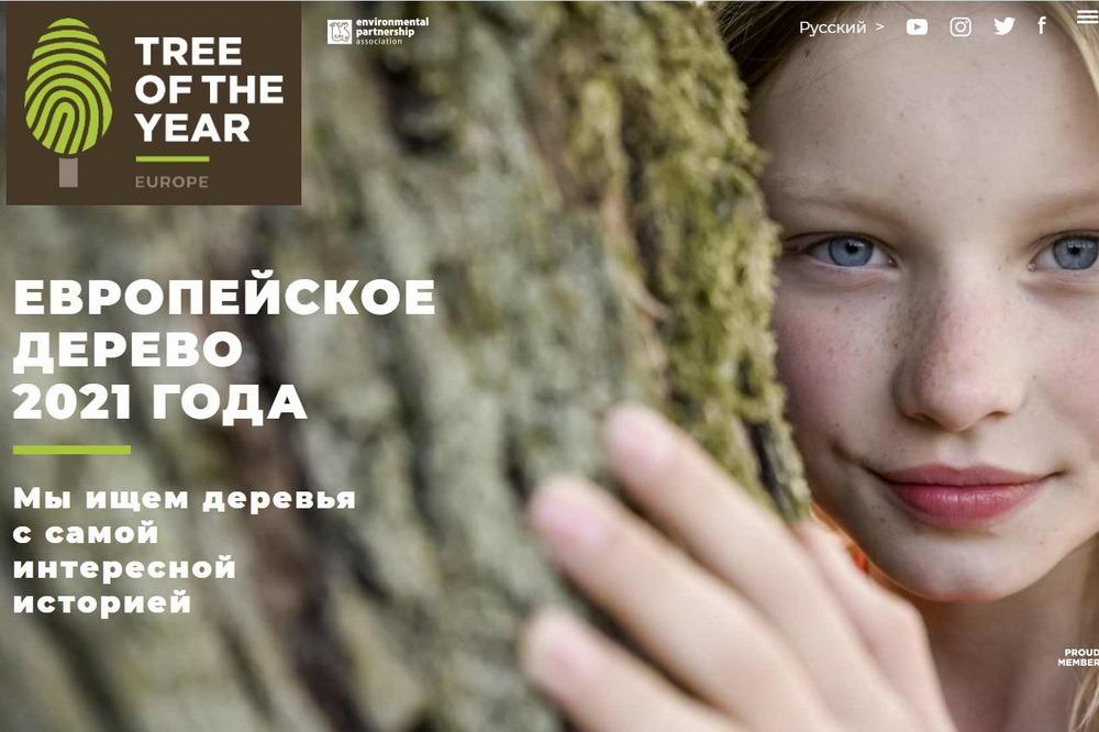 Дербентский платан стал третьим в конкурсе «Европейское дерево 2021 года». Не обошлось без скандала