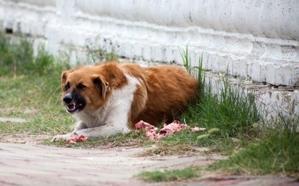 Мэрия и «Шериф» вешают собак друг на друга
