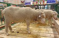 Дагестан примет участие в Российской выставке племенных овец и коз