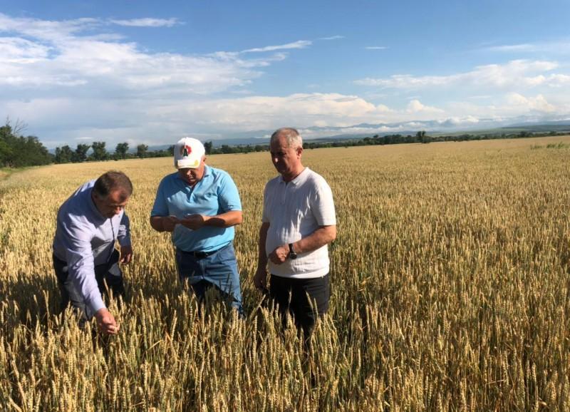 В Дагестане первыми в стране приступили к уборке зерновых