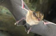 В Дагестане обнаружили редкий вид летучих мышей