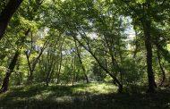 С – значит «супер». А еще – Самурский лес. Что одно и то же