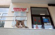 Ленин, коты, ревнивый избиратель. Курьезы и «мимими» на выборах в Дагестане