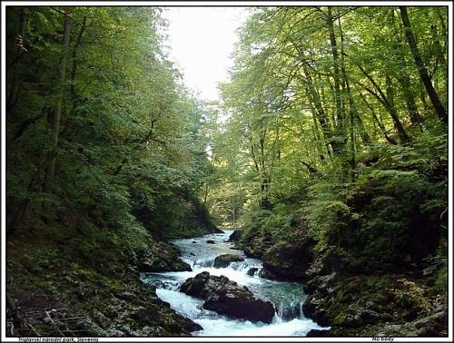 Становление лесного хозяйства в Дагестане