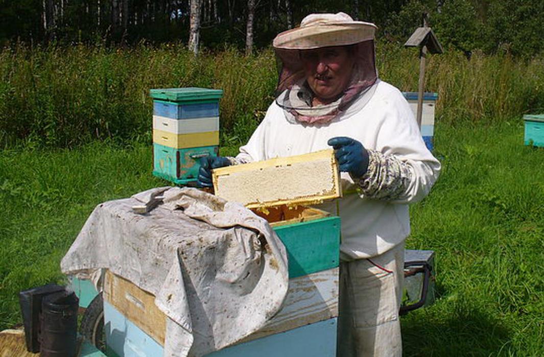 В Дагестане планируют развивать пчеловодство
