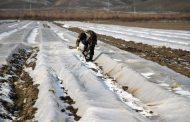 Пекинская капуста по-дагестански