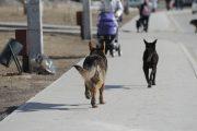 В Дагестане всерьез взялись за проблему