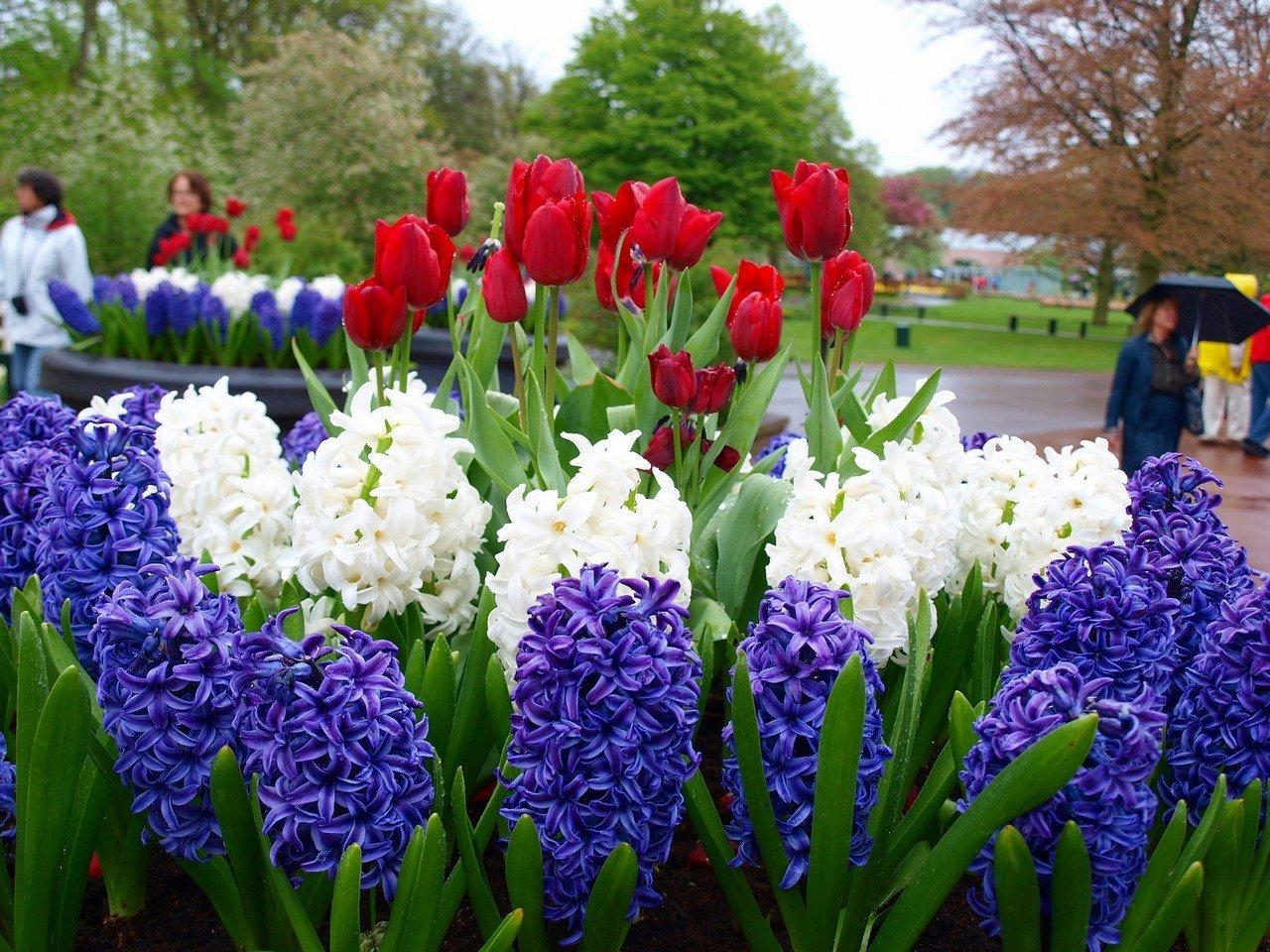 Махачкалу весной и летом будут украшать более одного миллиона цветов