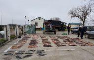 Убийц тюленей поймали пограничники Дагестана (видео)