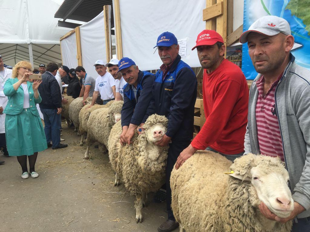 Дагестанские животноводы получили шесть наград на выставке племенного скота в Астрахани