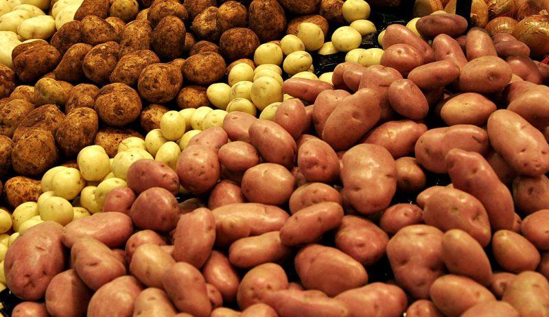 Дагестан будет поставлять картофель в Ленинградскую область