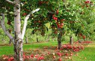 В Дагестане заложили свыше 1,2 тысяч садов