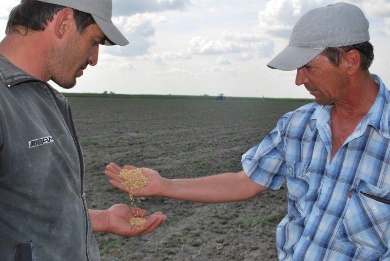 В Кизлярском районе посадят 14 тысяч гектаров риса