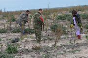 Питомник для выращивания около 20 видов деревьев создали в Ногайском лесничестве