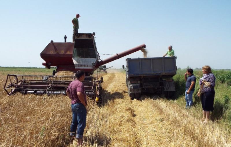 Дагестанские аграрии собрали около 140 тысяч тонн озимых зерновых культур