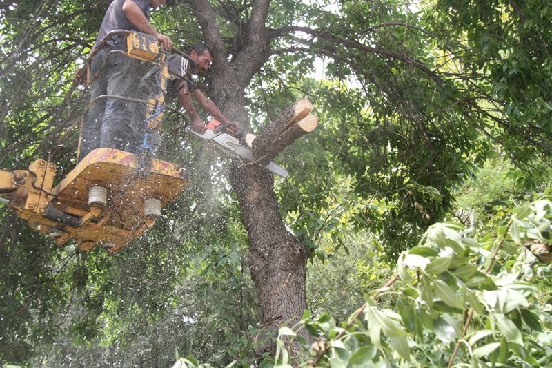 Коммунальщики Махачкалы вывезли около двухсот поврежденных ураганом деревьев