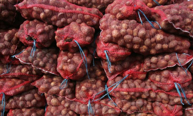 Около полумиллиона тонн картофеля соберут в Дагестане
