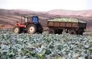 В Дагестане соберут около 1,5 миллиона тонн овощей