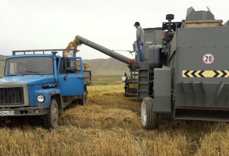 В Дагестане началась уборка яровых колосовых зерновых культур