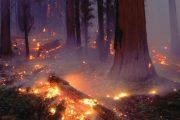 В Тляратинском районе горит лес