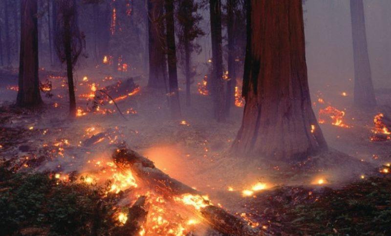 В Тляратинском районе горит лес (видео)