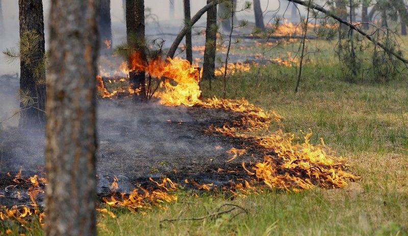 В горах Дагестана продолжаются лесные пожары