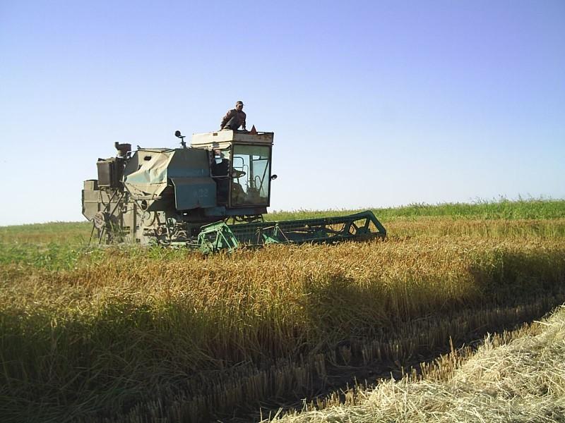 В Дагестане собрали более 50 тысяч тонн риса