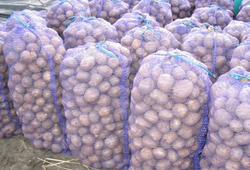 В Дагестане завершается уборка овощей, картофеля и плодовы культур