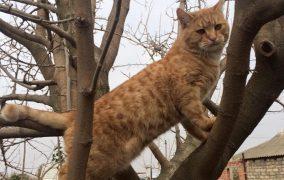 Человек и кошка. Песня о безумной любви