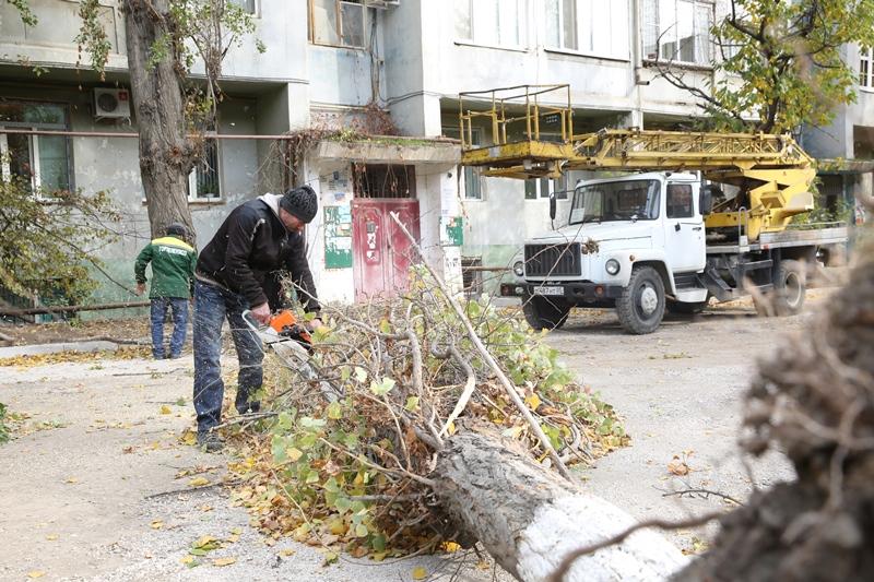 Сильный ветер повалил в Махачкале деревья и столбы
