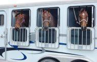 Предотвращена попытка транзита лошадей через территорию РФ