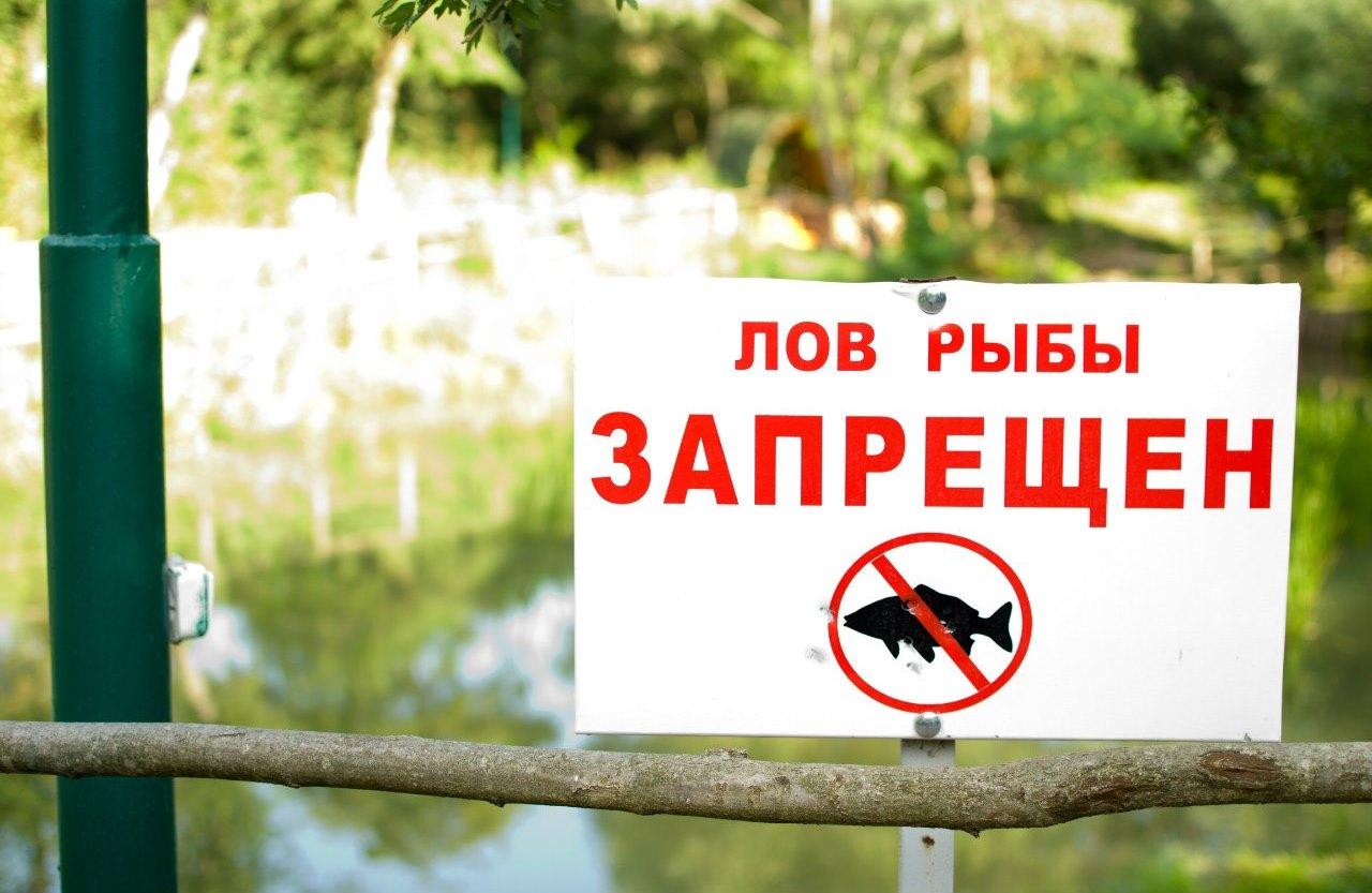В Дагестане объявлен запрет на вылов рыбы