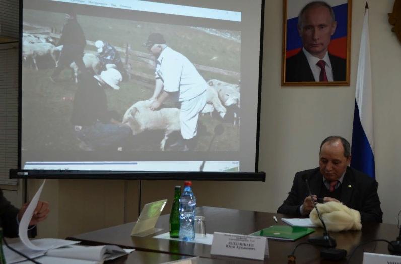 Выведен новый тип дагестанской горной породы овец