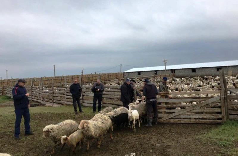 Комиссия минсельхозпрода обнаружила приписки в пяти хозяйствах