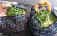 Предотвращен нелегальный ввоз в Россию 1130 кг растениеводческой продукции