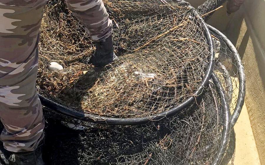 В Аграханском заливе из браконьерских ловушек спасена частиковая рыба (видео)