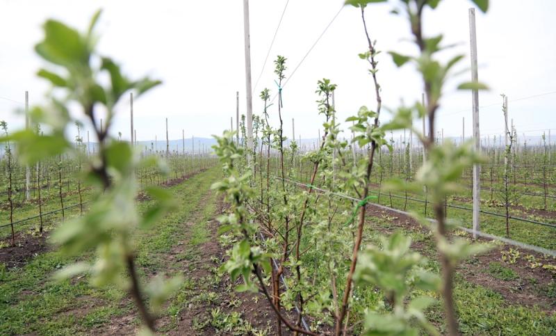 В Дагестане перевыполнен план по весенней закладке садов