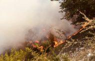 В Гумбетовском районе вспыхнул лесной пожар