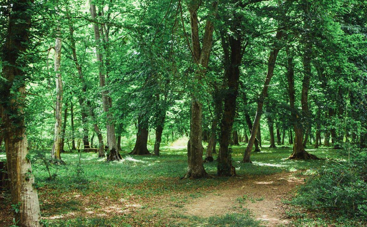 Минприроды РФ намерено создать в Дагестане национальный парк