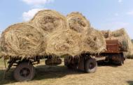 Около миллиона тонн кормов заготовлено в Дагестане
