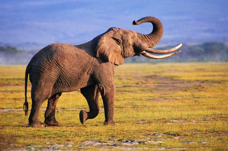 Человек уничтожил более половины диких животных за 50 лет